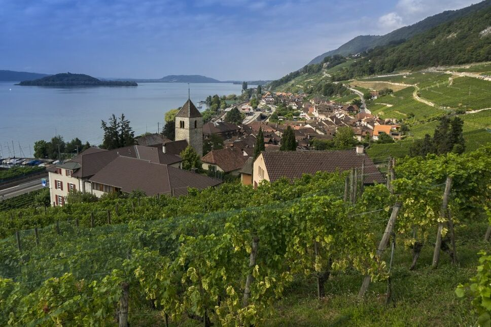 Switzerland vineyard